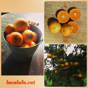 Les primeres mandarines de la temporada